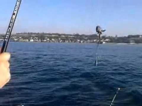 ловля рыбы с берега на черном море