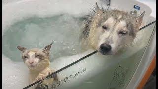 Perro y Gato Juntos En Un Jacuzzi