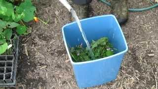 Collecting Plant Material For Free Nutrient Dense Organic Fertilizers