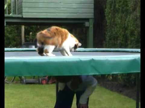 Cat on trampoline funny