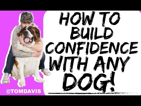 How to Build Confidence in Your Dog or Fearful Dog! - Training with Americas Canine Educator