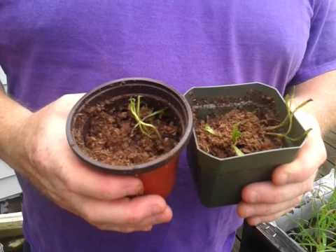 Venus Fly Trap Kit From Lowes Venusflytrap Youtube