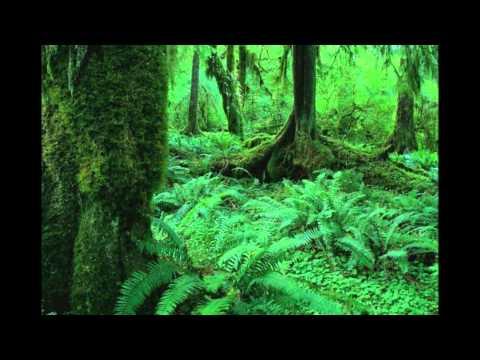 Видео Охрана растительности