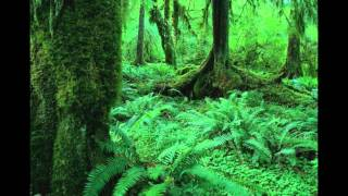 Рациональное использование и охрана лесов.mp4