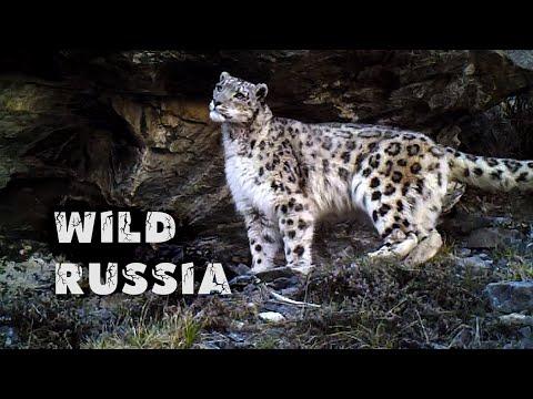 видео: Алтай. Земля снежного барса © Иван Усанов