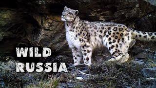Altay - the land of snow leopard © Ivan Usanov. Алтай - земля снежного барса.