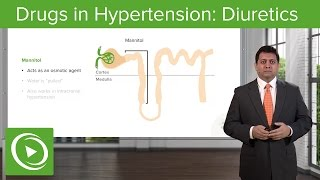 Drugs in Hypertension: Diuretics – Cardiovascular Pharmacology   Lecturio