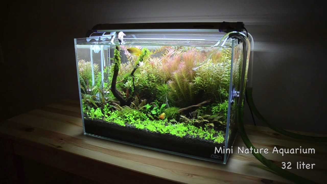 planted tank mini nature aquarium youtube. Black Bedroom Furniture Sets. Home Design Ideas