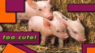 """BEDTIME STORIES PRESENTS:  """"Farm Animals #2"""" Read by Bestselling Author, KIDS LOVE IT!! :D"""