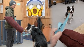 Dog goes CRAZY on leash | My dog wont walk on a leash PT 2