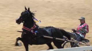 class 137   roadster horse to bike open championship