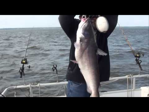 Video Santee cooper catfishing guide