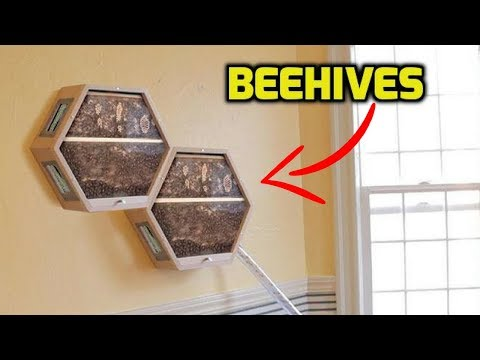 Amazing Installable Beehives In Living Room