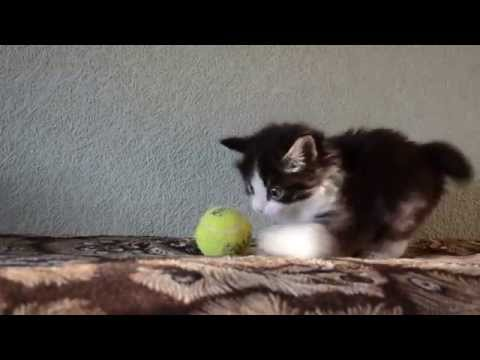 Katzenbaby spielt mit Tennisball