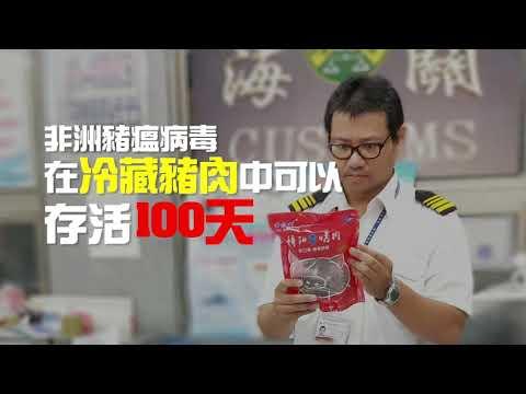 非洲豬瘟逼近臺灣,別讓養豬產業重演口蹄疫夢魘