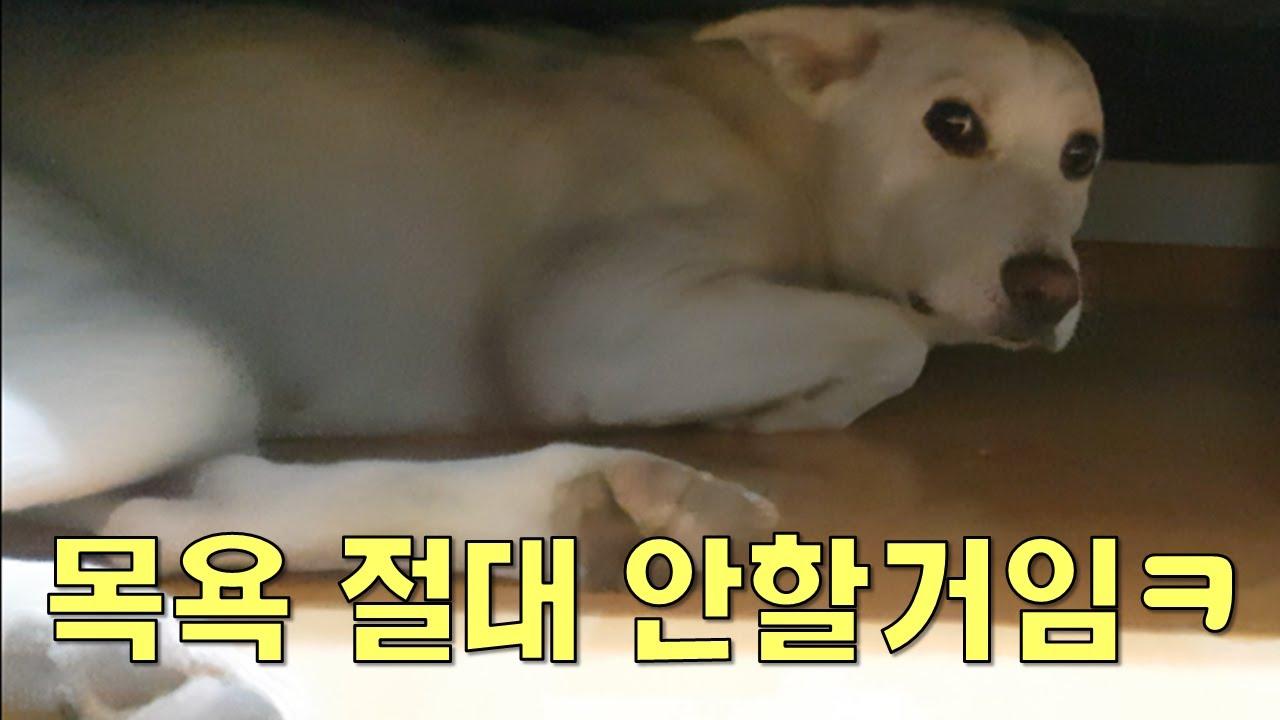 [화제의 목욕시리즈] 목욕 얘기만 꺼내면 냅다 도망가는 강아지ㅋㅋ | Dog Reaction When I Ask Her For A Bath | Korean Dog