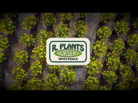 R. Plants Nursery Wholesale