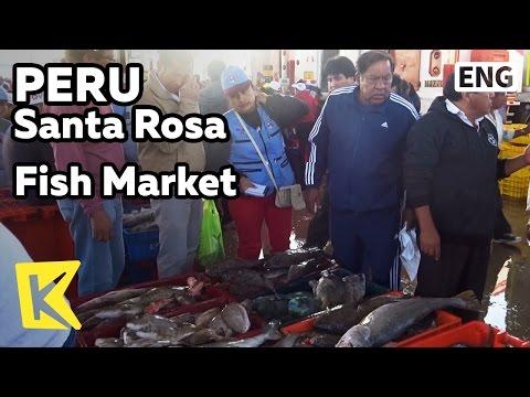 【K】Peru Travel-Santa Rosa[페루 여행-산타로사]수산물 거래의 현장/Fish Market/Wholesalers