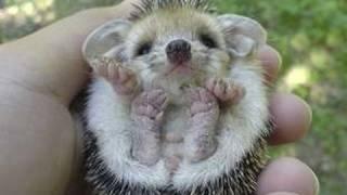 Hello, Hedgehog! : Ultra Kawaii thumbnail