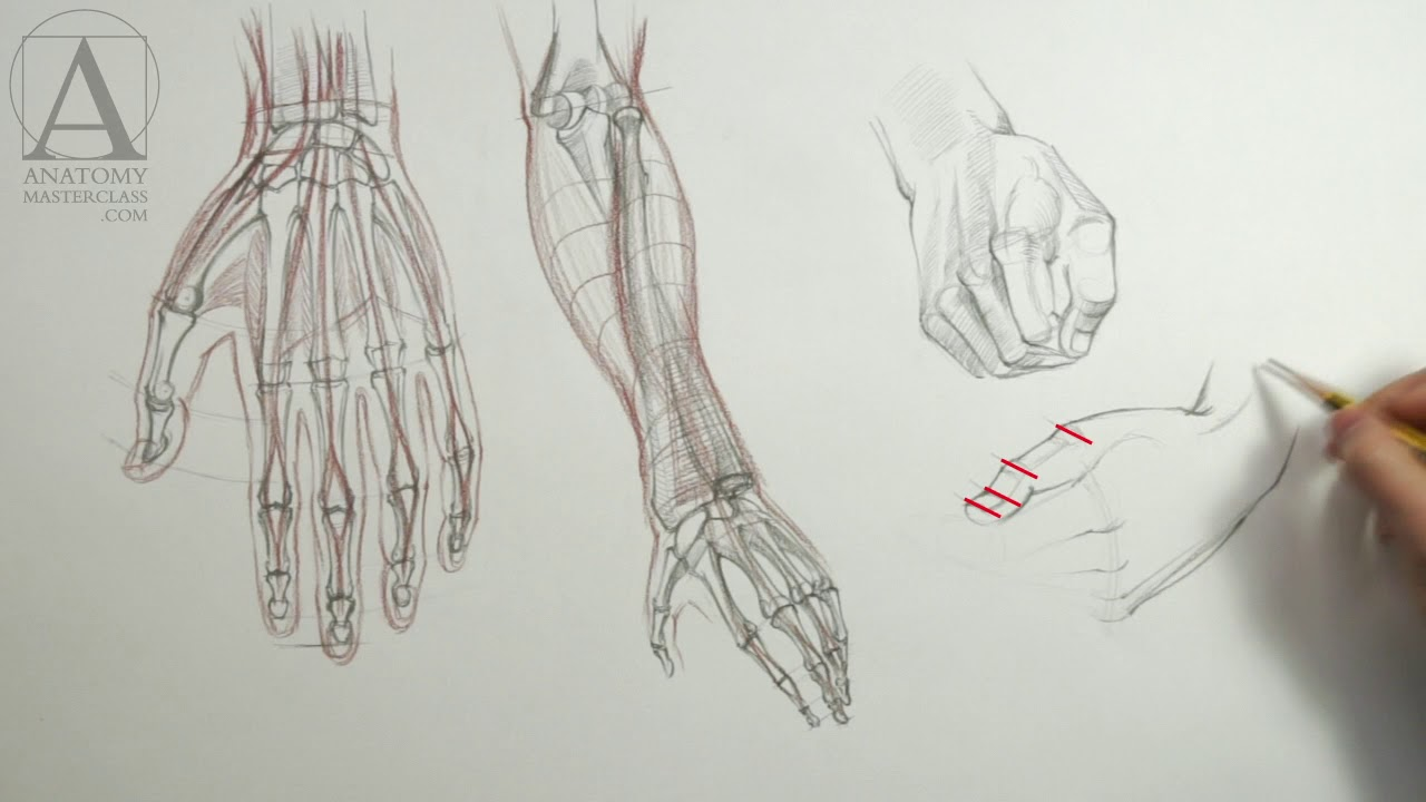 Drawing Hands Anatomy Lesson For Artists Youtube