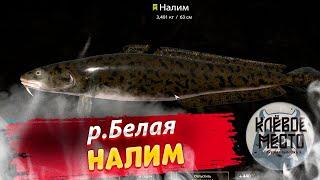 Русская рыбалка 4 Фарм р Белая Налим рр4 налим река белая