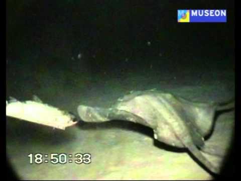 Op de bodem van de diepzee