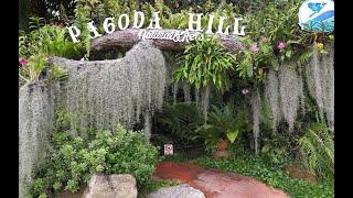 สวนสนุก Ep.13 ลุยสวน Rainforest ที่ Pagoda Hill เขาเขียว