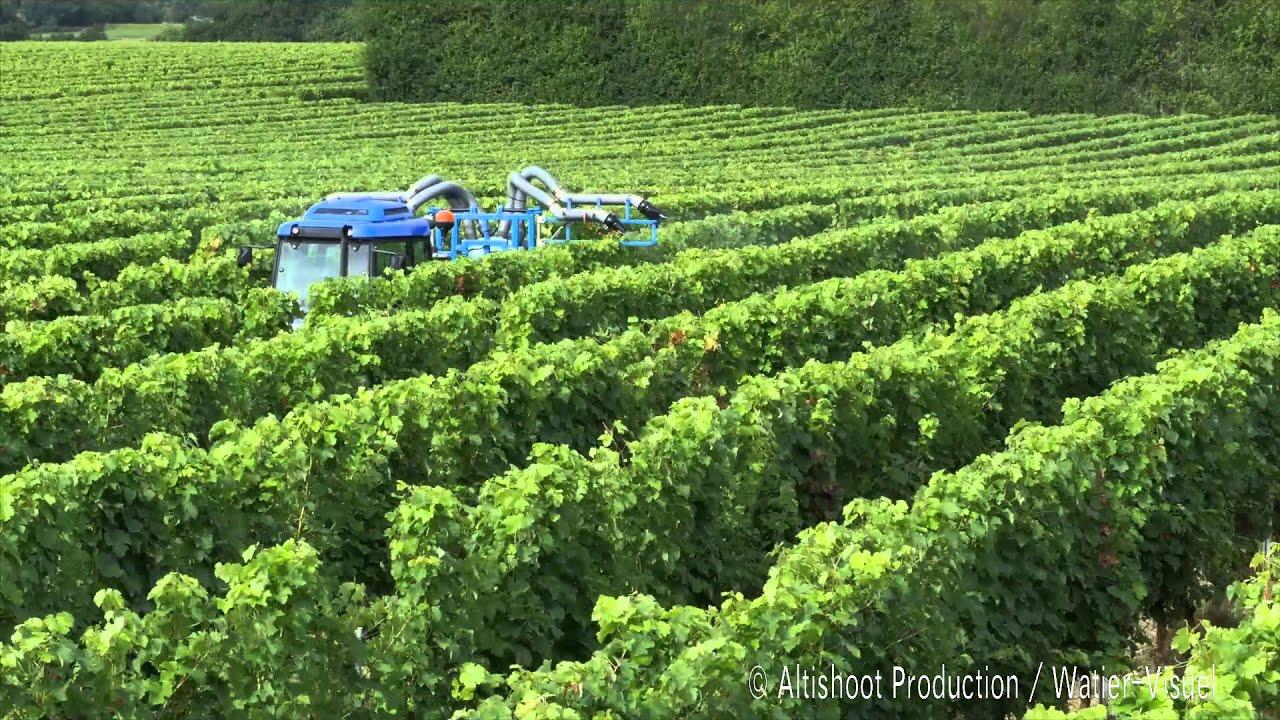Traitement fongicide de la vigne protection phytosanitaire du vignoble youtube - Traitement de la vigne ...