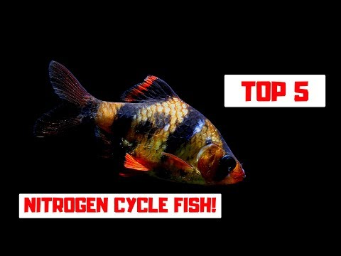 CYCLING A NEW TANK? TOP 5 NITROGEN CYCLE FISH!
