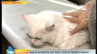 Ужесточение закона о содержании животных обсуждают в Иркутске