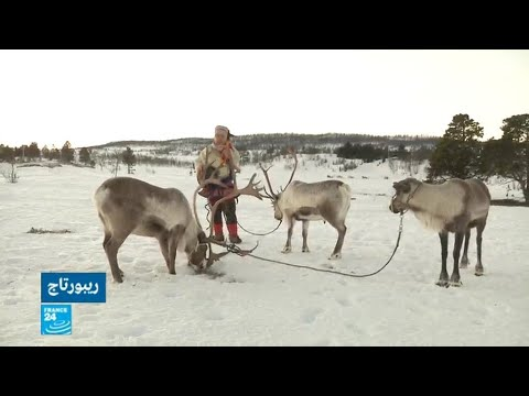 رعاة الرنة في النروج قلقون على قطعانهم بسبب التغير المناخي  - نشر قبل 2 ساعة
