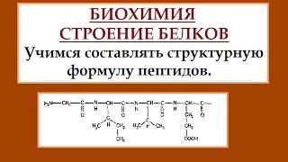 Биохимия. Белки. Строим полипептидную цепь.