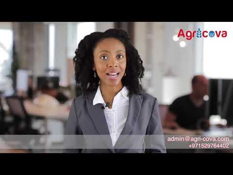 Spokesperson Videos | Website Design Agency