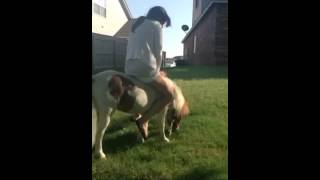 Pony ride fail