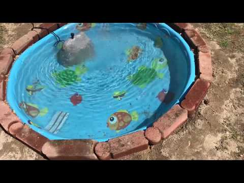 I'm Building The Most INSANE Backyard Kiddie Pool Pond On Youtube!