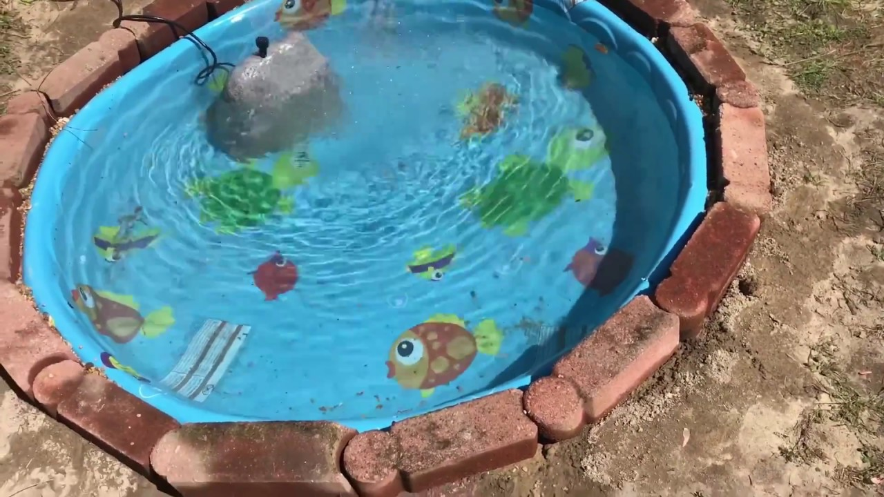 Jacuzzi Pool Youtube I M Building The Most Insane Backyard Kiddie Pool Pond On Youtube
