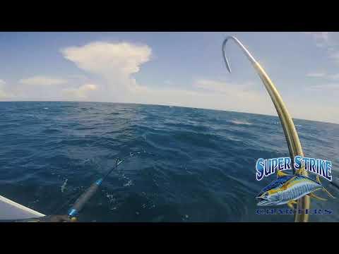 Yellowfin Tuna Fishing In Venice LA