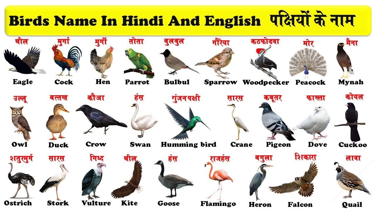 Birds Names In English And Hindi With Pdf पक ष य क न म Birds Name In Hindi And English Youtube