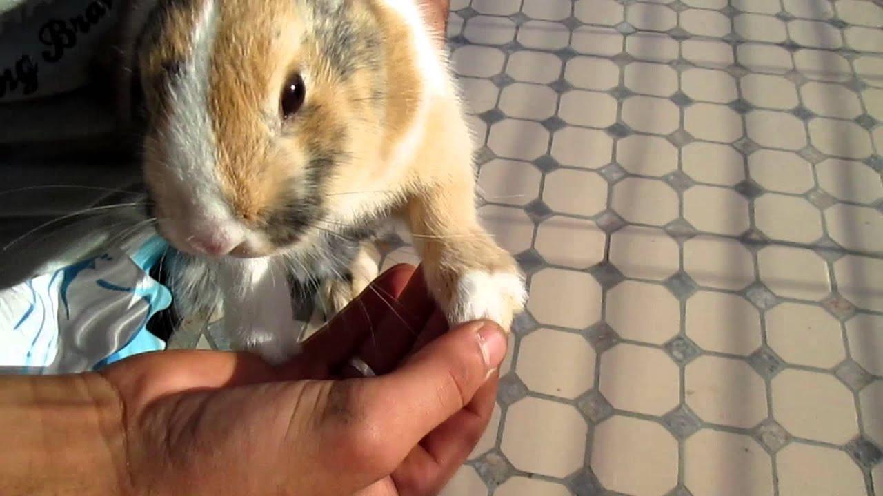 Comment couper les ongles d 39 un lapin c a e n 1 youtube - Comment couper les ongles d un lapin ...