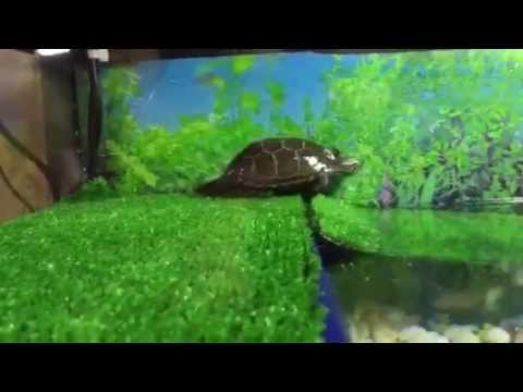 Mini acuario para tortugas youtube for Acuario tortugas