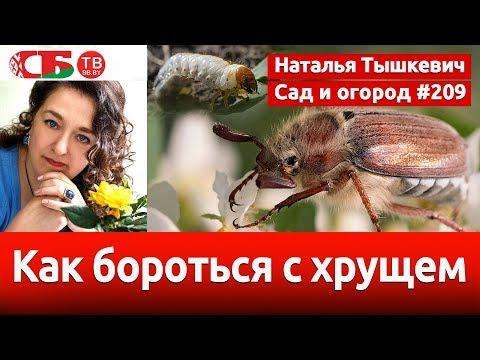 Майский жук: как бороться с хрущем и его личинками | видео 4K UHD