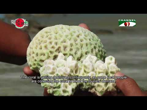 Nature and Life - Episode 278 (Conservation of Coral)
