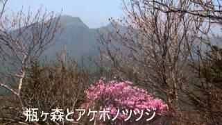 アケボノツツジの岩黒山