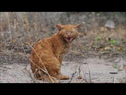 Забота о котике на 2 недели в г Москва за 2000 рублей 3