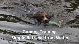 Gundog Training - Simple Retrieve From Water