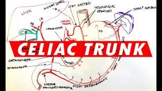 Celiac Trunk - Arterial supply to the Stomach