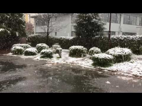 Snowfall in November in Tokyo after 54 years in 2016