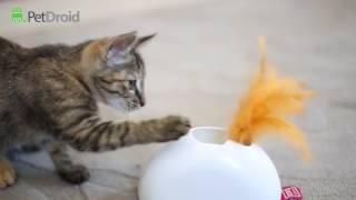 Pet Droid от Gigwi интерактивная игрушка для кошек