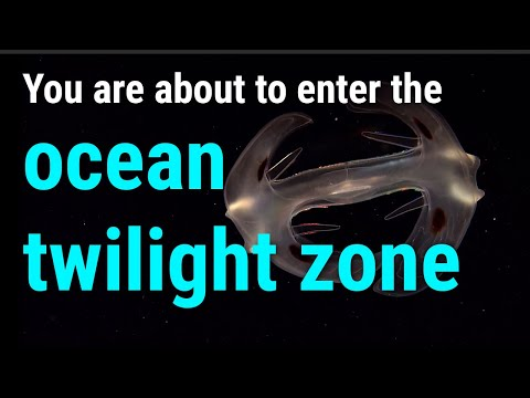 The Ocean Twilight Zone