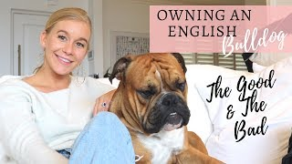 OWNING AN ENGLISH BULLDOG   'PUPDATE'   OUR BRITISH BULLDOG UPDATE